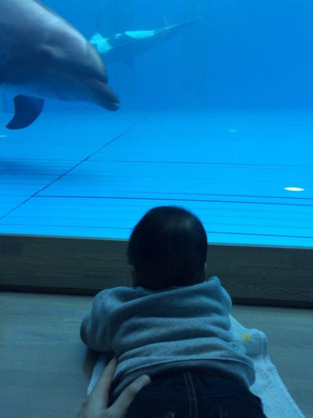 そうた初めての水族館