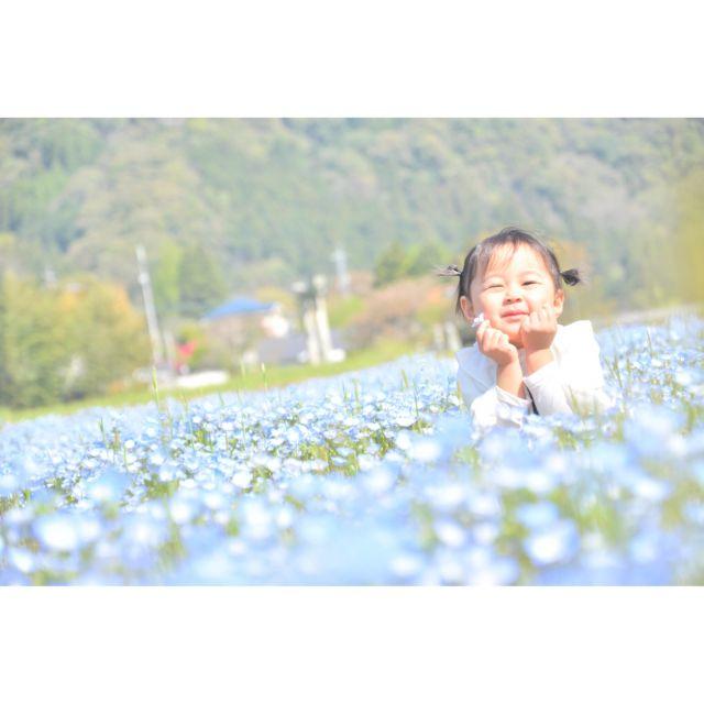 青の洞門のネモフィラ畑