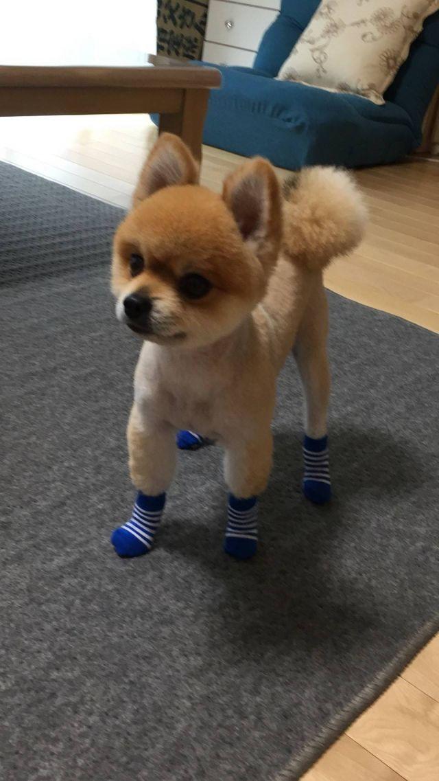 初めての靴下