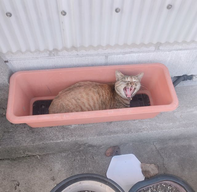 猫、育ってます!!!