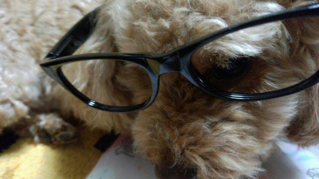 メガネ似合うかな?