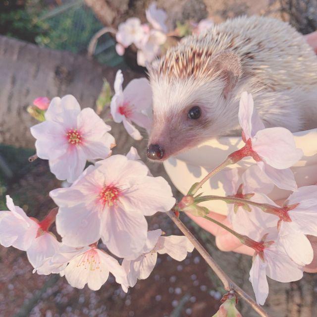 お花見に行ったよ~!!